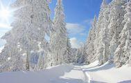 Verschneiter Weg im Schwarzwald