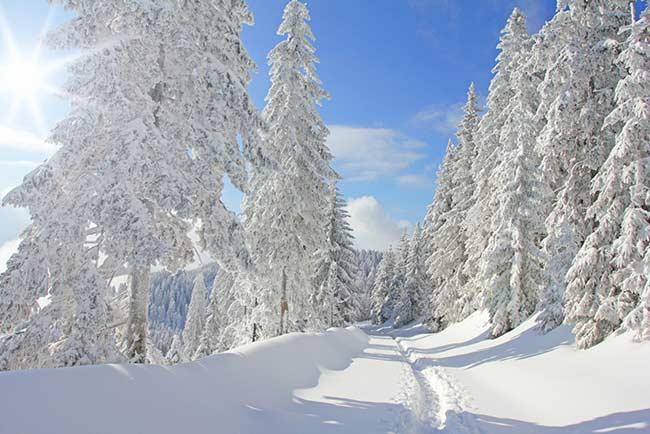 Wintersport am Schluchsee